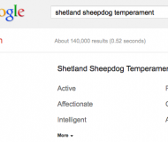 Shetland Sheepdog Temperament Search